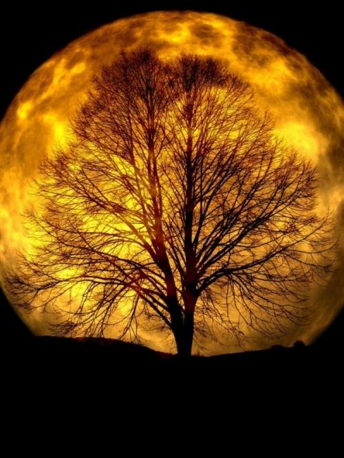 Vollmond mit Baum